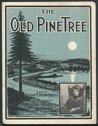 """The Old Pine Tree"""