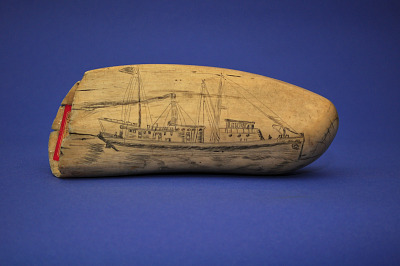 Scrimshaw Sperm Whale's Tooth
