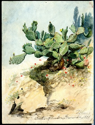 Cactus at the Alhambra