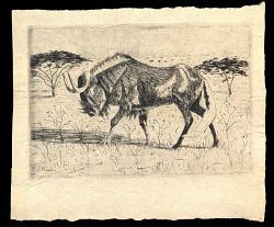 wildebeast in field