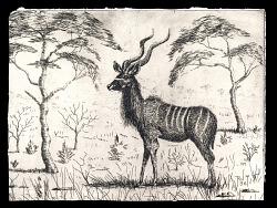 two kudu