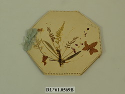 album, dried flower