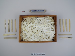 images for Wooden Box of Ivory Points Used for Smallpox Vaccination-thumbnail 4