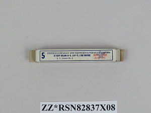 images for Wooden Box of Ivory Points Used for Smallpox Vaccination-thumbnail 14