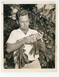 Man pruning foliage