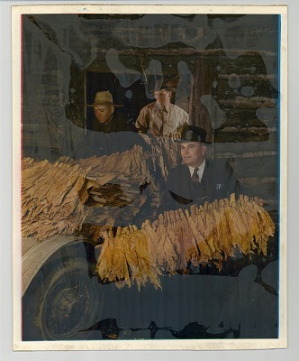 Three men and tobacco leaves