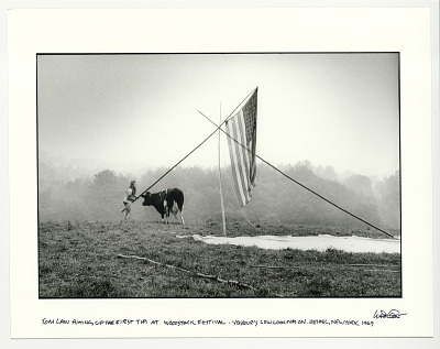 Tom Law putting up the first tipi at Woodstock, Yasgur's cow looking on. Bethel, New York, 1969