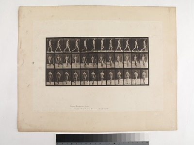 Animal Locomotion. Plate 1.