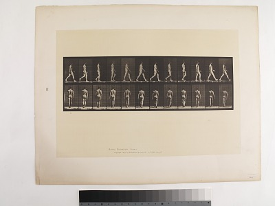 Animal Locomotion. Plate 2.