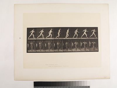 Animal Locomotion. Plate 4.