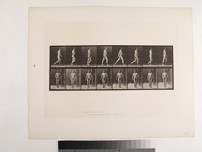 Animal Locomotion. Plate 5.