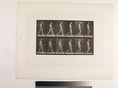 Animal Locomotion. Plate 6.