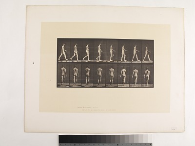 Animal Locomotion. Plate 9.