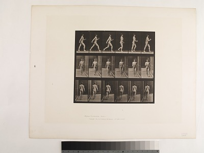 Animal Locomotion. Plate 10.