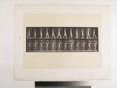 Animal Locomotion. Plate 27.