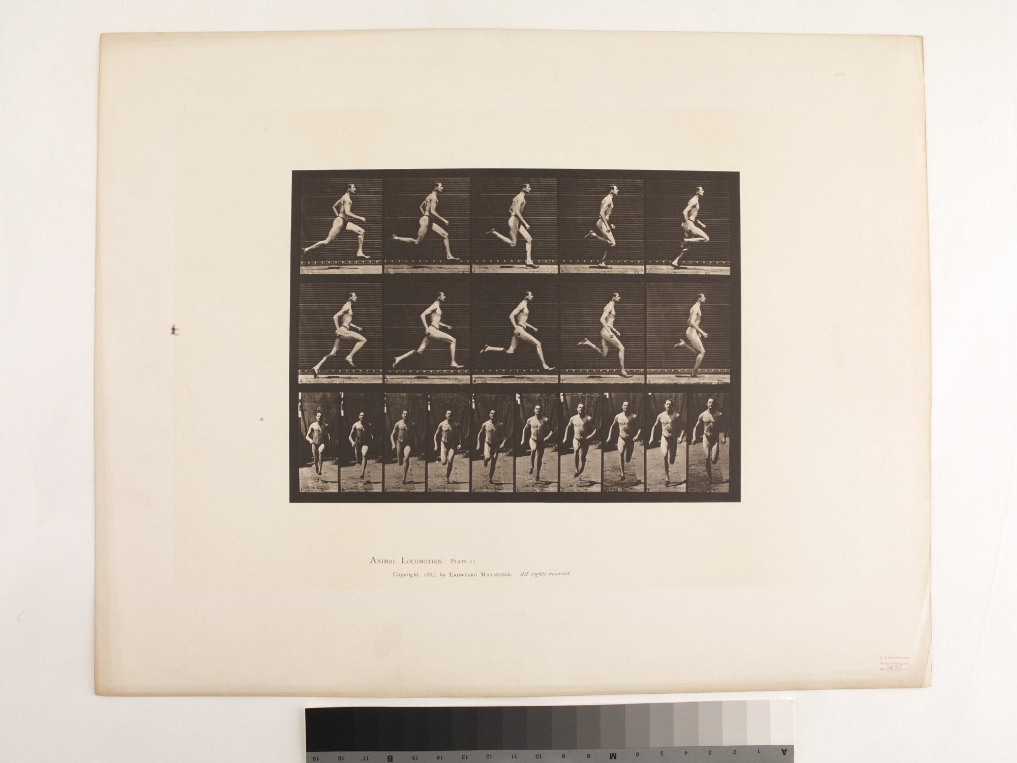 """Animal Locomotion. Plate 60.""; Male, Running"