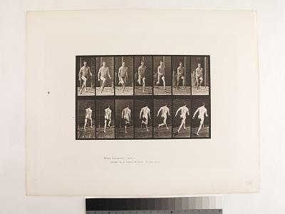 Animal Locomotion. Plate 66.