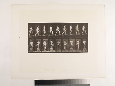 Animal Locomotion. Plate 75.