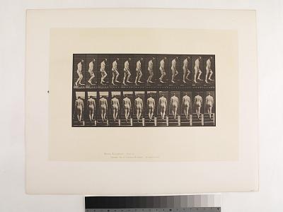 Animal Locomotion. Plate 89.
