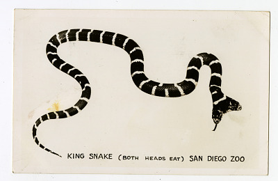 Two-Headed King Snake