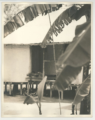 hut with natives seen at window