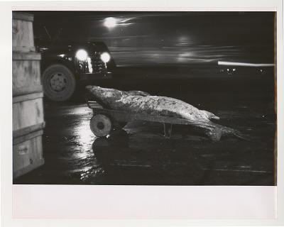Huge Fish on Handtruck, Night