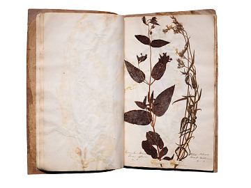 Micajah WC. Gardiner's Botanical Sample Book from the West Town Boarding School