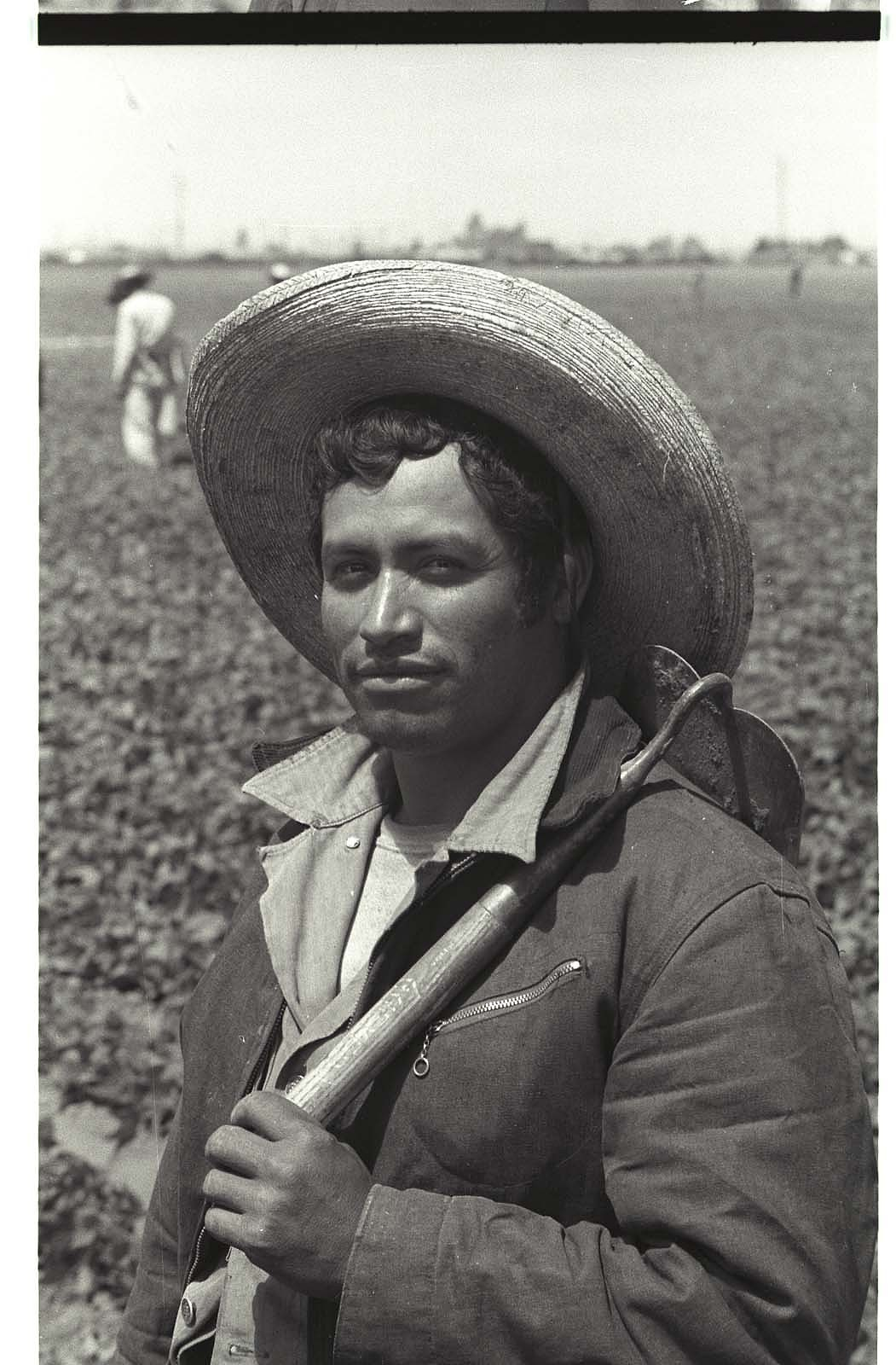 A Bracero worker in the field holding a short-handled hoe.