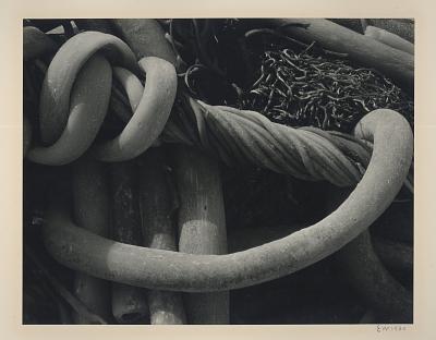 Kelp #3