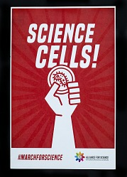 Science Cells!