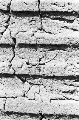 Lizard on wall, House of the Oghiamien, Benin City, Nigeria, [negative]
