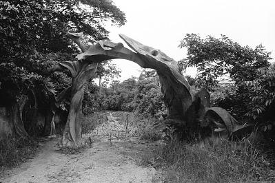Shrine at the Osun Grove, Oshogbo, Nigeria, [negative]