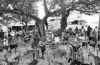 Section for goats at the market, Ife, Nigeria, [negative]