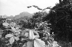 Natural landscape, Man region, Ivory Coast, [negative]