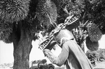 Wanyugo mask dancer, near Korhogo, Ivory Coast, [negative]