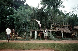 Men's secret society erecting ajaba dressing house of Amozo ward, Mgbom village, Afikpo Village-Group, Nigeria. [slide]