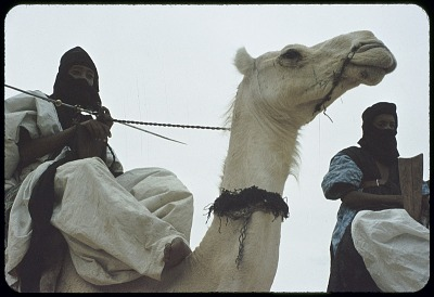 Tuareg men on dromedary camels wearing turban and face veil, near Tombouctou, Mali, [slide]
