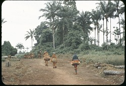 Small group of Igbo wood-masked dancers in various raffia and leaf costumes, Ugwuoba village, Nigeria. [slide]