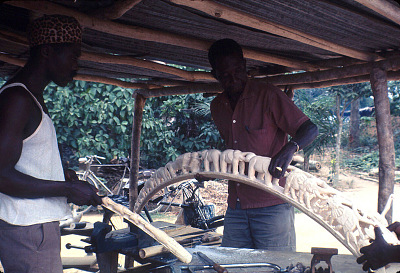Congolese artists working on curved ivory tusks depicting procession of elephants trunk to tail, Congo (Democratic Republic), [slide]