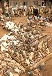Taxidermy shop, near Nairobi, Kenya. [slide]