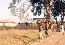 Gwari women carrying firewood in basket, near Kaduna, Nigeria, [slide]