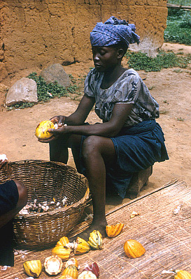Yoruba woman removing beans from cocoa pods, Adamo village, Nigeria. [slide]