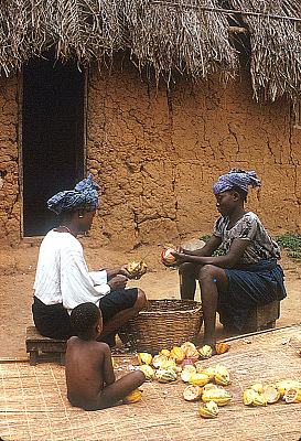 Yoruba women removing beans from cocoa pods, Adamo village, Nigeria. [slide]