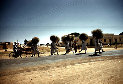 Prisoners carrying grass for the Emir of Kano's horses, Kano, Nigeria, [slide]