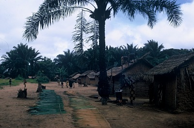Preparing new palm leaves to place on roofs, Shamanyingidi village, Congo (Democratic Republic), [slide]
