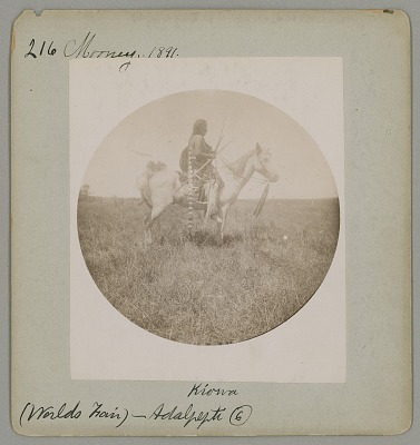 Adalpepti [Frizzle Head] 1892