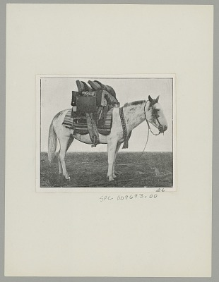 Argentine Horse Loaded with Household Goods n.d