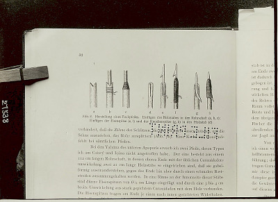 Illustration in Book Showing Fish Spears and Methods of Attaching Points to Pole n.d