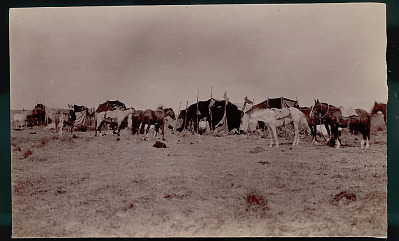 View of Camp Showing Toldos (Skin and Pole Tents); Horses With Trappings, One Hobbled, and Meat Drying on Poles JAN 1898