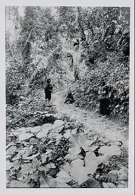 Three Amahuaca Men in Costume and Carrying Burden Bags with Tumplines On Jungle Path JUL 1910